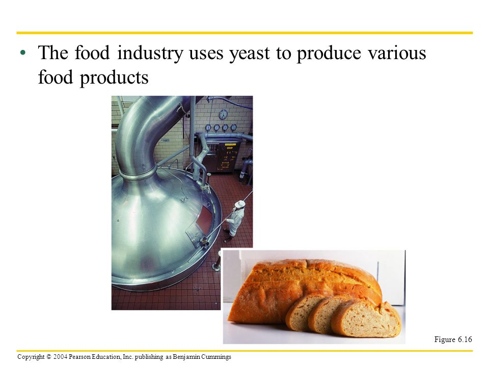 The food industry uses yeast to produce various food products