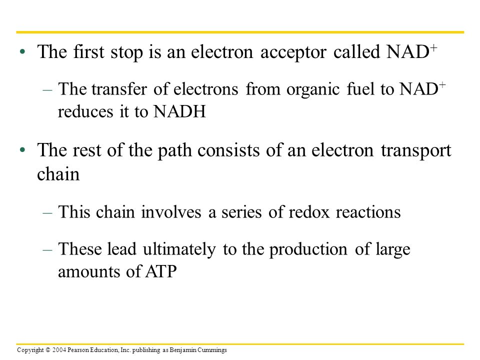 The first stop is an electron acceptor called NAD+