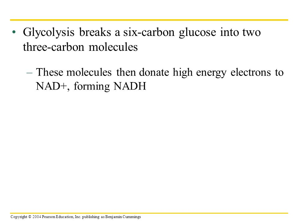 Glycolysis breaks a six-carbon glucose into two three-carbon molecules