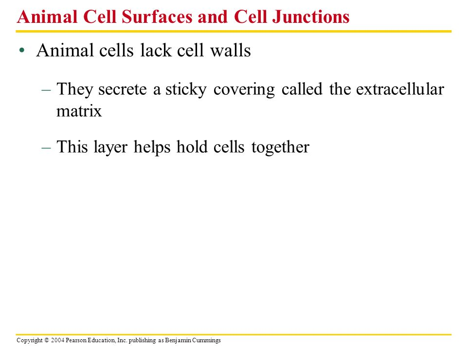 Animal Cell Surfaces and Cell Junctions