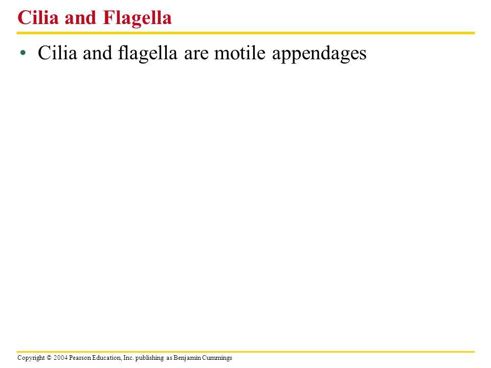 Cilia and Flagella Cilia and flagella are motile appendages