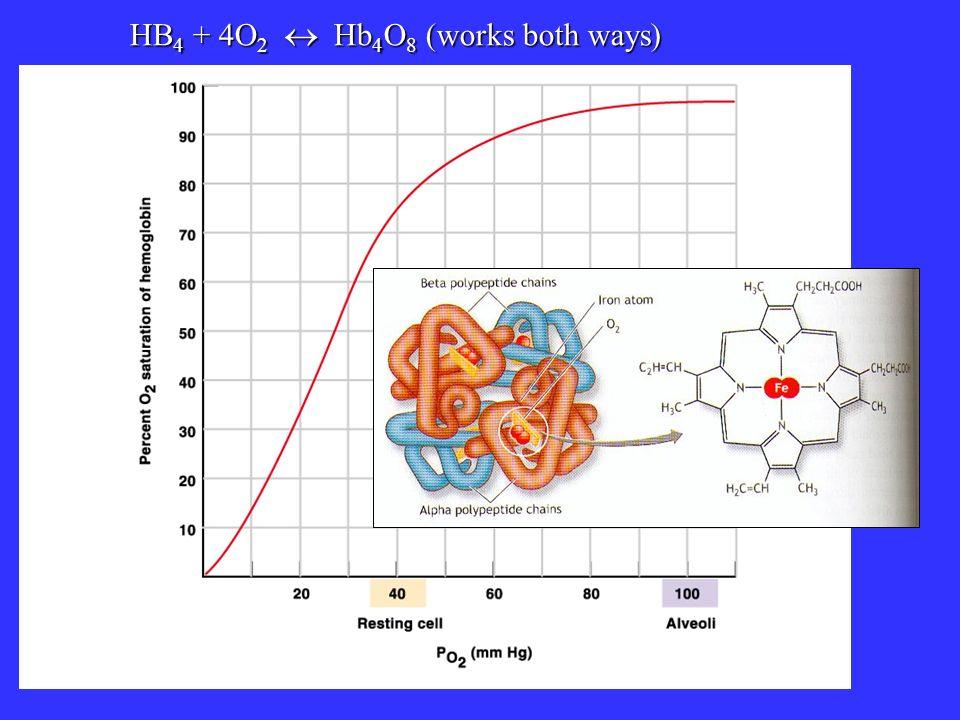 HB4 + 4O2  Hb4O8 (works both ways)