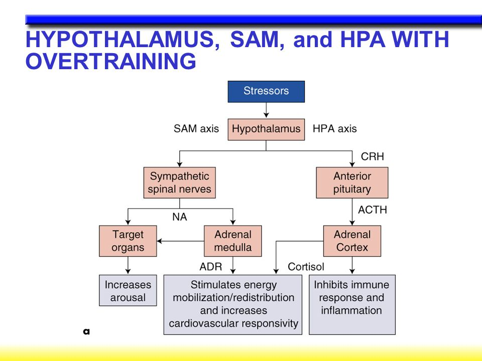 HYPOTHALAMUS, SAM, and HPA WITH OVERTRAINING