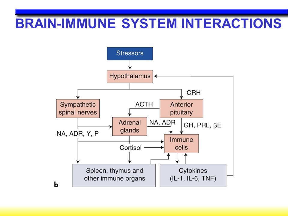 BRAIN-IMMUNE SYSTEM INTERACTIONS