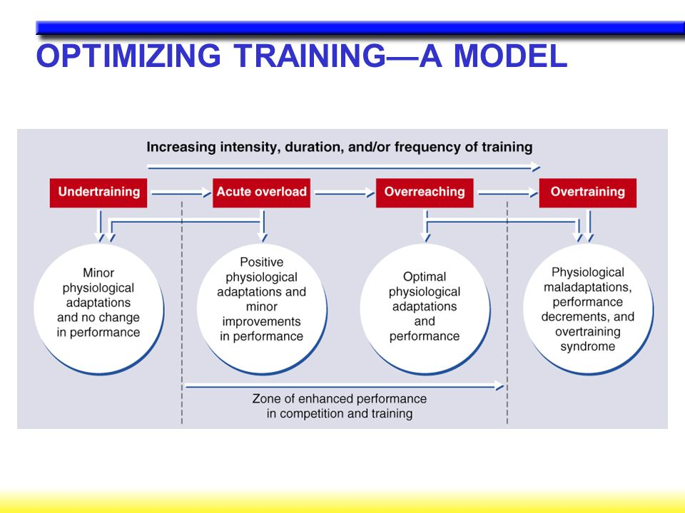 OPTIMIZING TRAINING—A MODEL