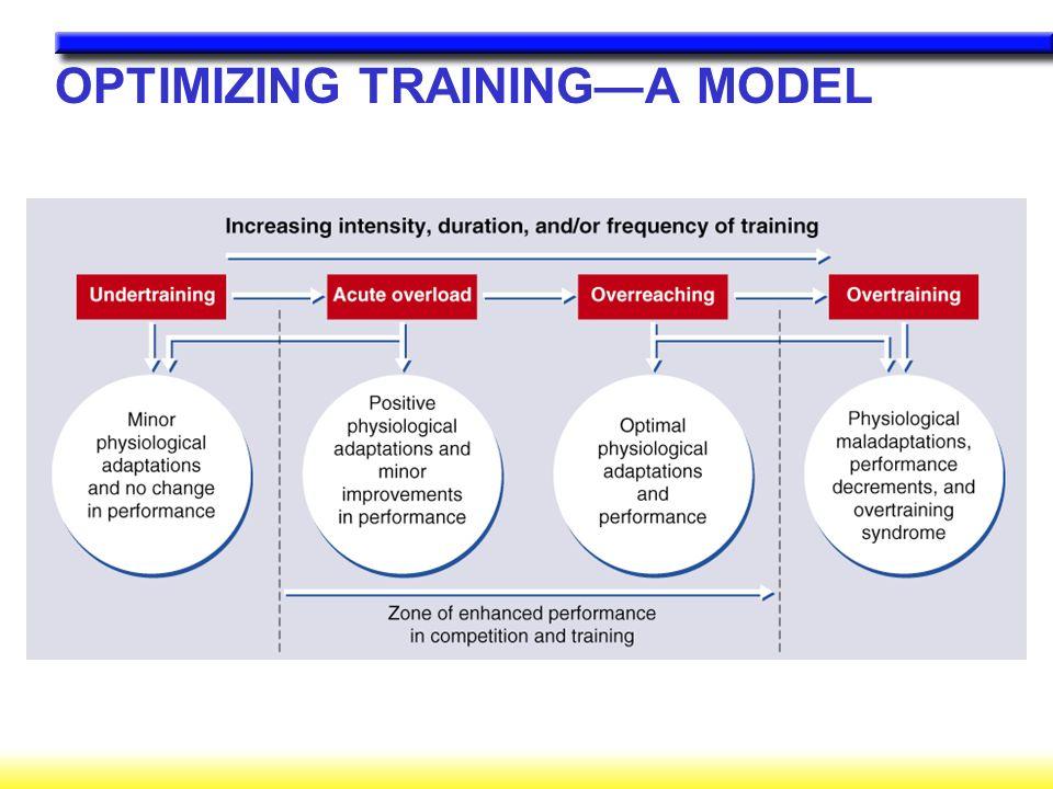 OPTIMIZING TRAINING—A MODEL