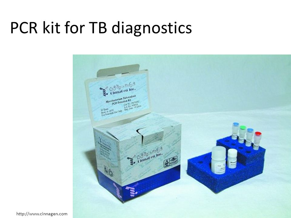 PCR kit for TB diagnostics