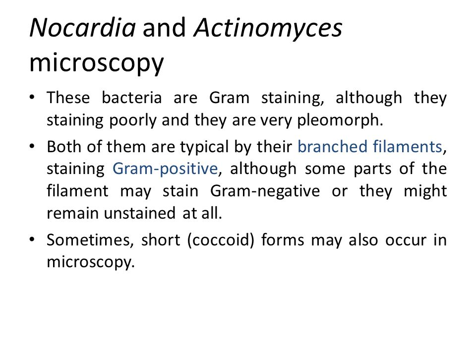 Nocardia and Actinomyces microscopy