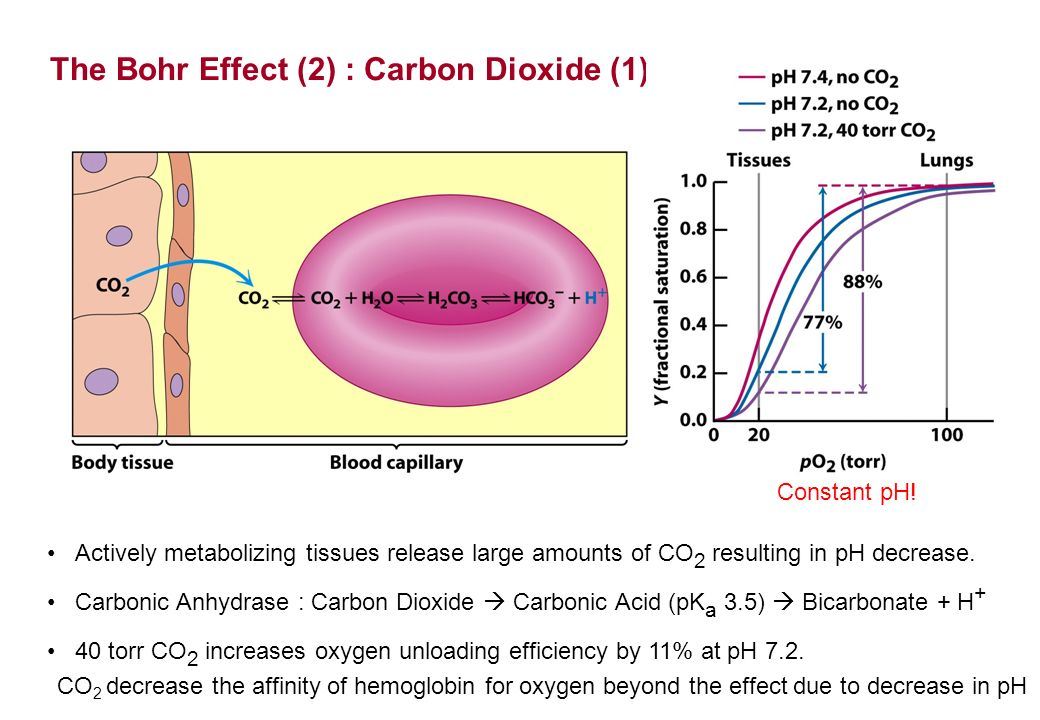 effect of carbon dioxide on the Carbon dioxide in earth's atmosphere the net effect of slight imbalances in the carbon cycle over tens to hundreds of millions of years has been to reduce.