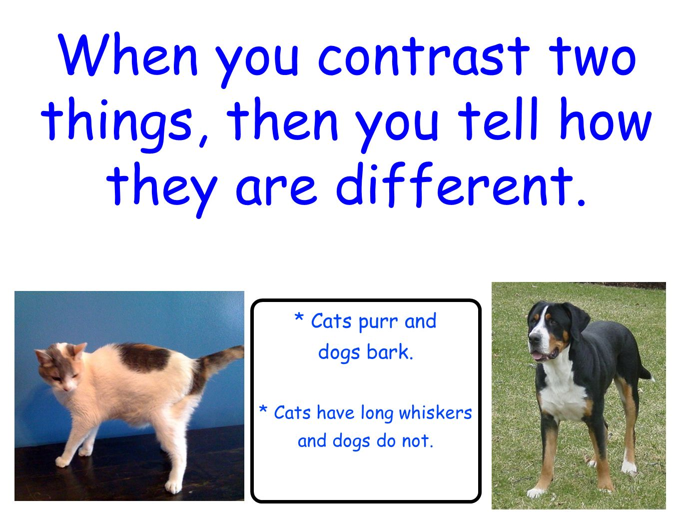 contrast essay large dogs and small dogs Essay on training and owning a dog:: many types of dogs out there some small, some large dog cat essays compare contrast] 564 words (16 pages) good essays.