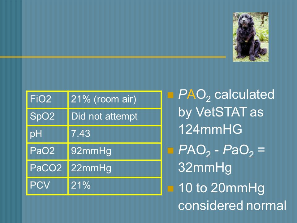 Can Pao Be Greater Than  On Room Air