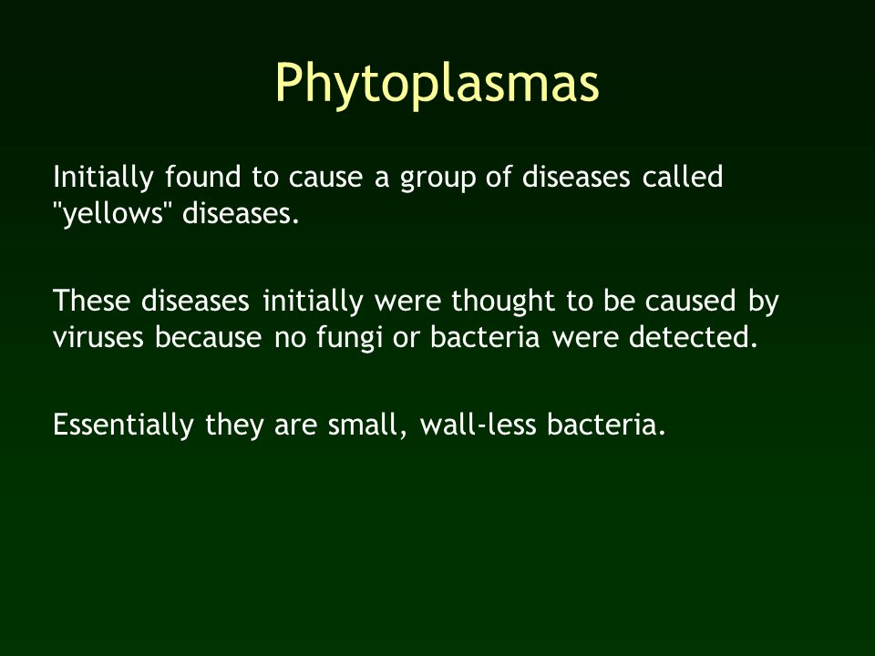 Phytoplasmas Initially found to cause a group of diseases called yellows diseases.