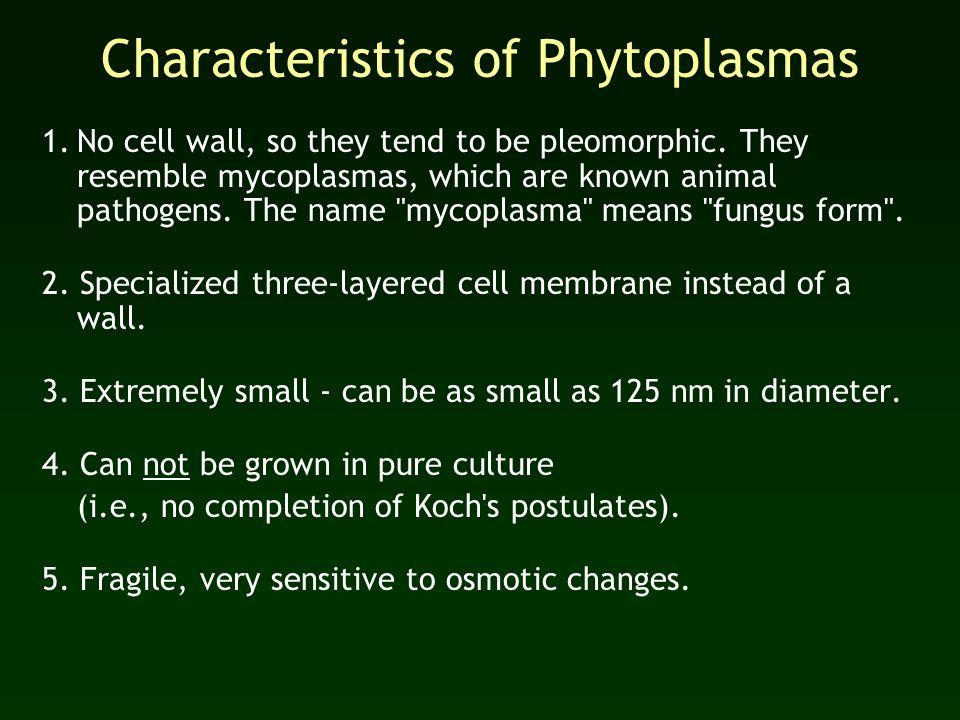 Characteristics of Phytoplasmas