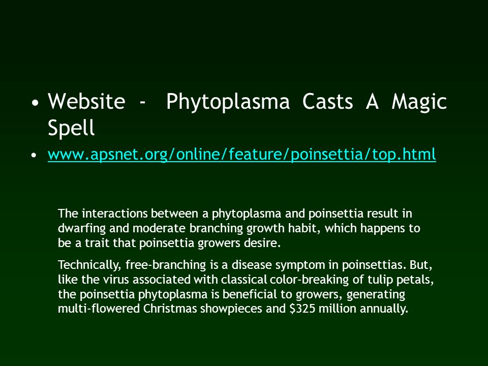 Website - Phytoplasma Casts A Magic Spell