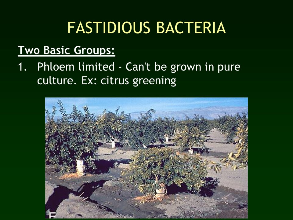 FASTIDIOUS BACTERIA Two Basic Groups: