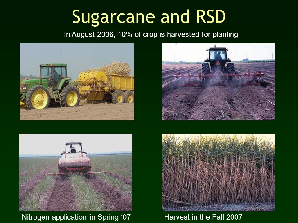 Sugarcane and RSD In August 2006, 10% of crop is harvested for planting. Nitrogen application in Spring '07.