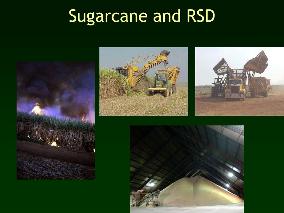 Sugarcane and RSD