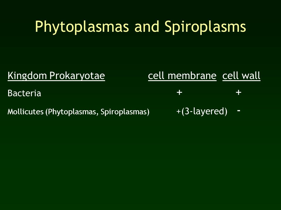 Phytoplasmas and Spiroplasms