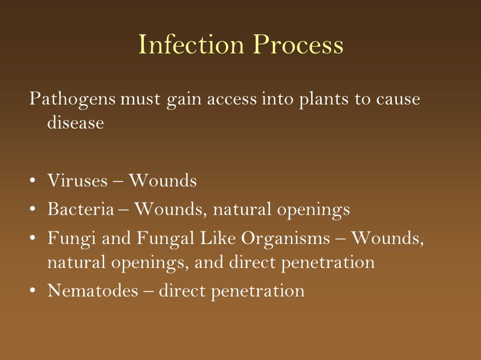 Infection Process Pathogens must gain access into plants to cause disease. Viruses – Wounds. Bacteria – Wounds, natural openings.