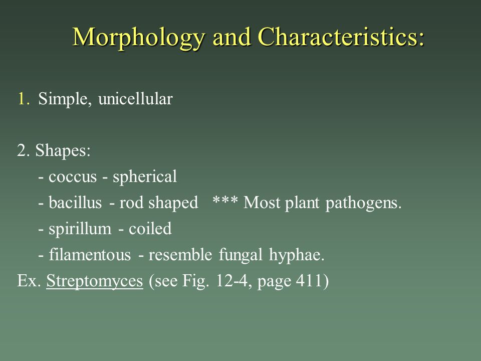 Morphology and Characteristics: