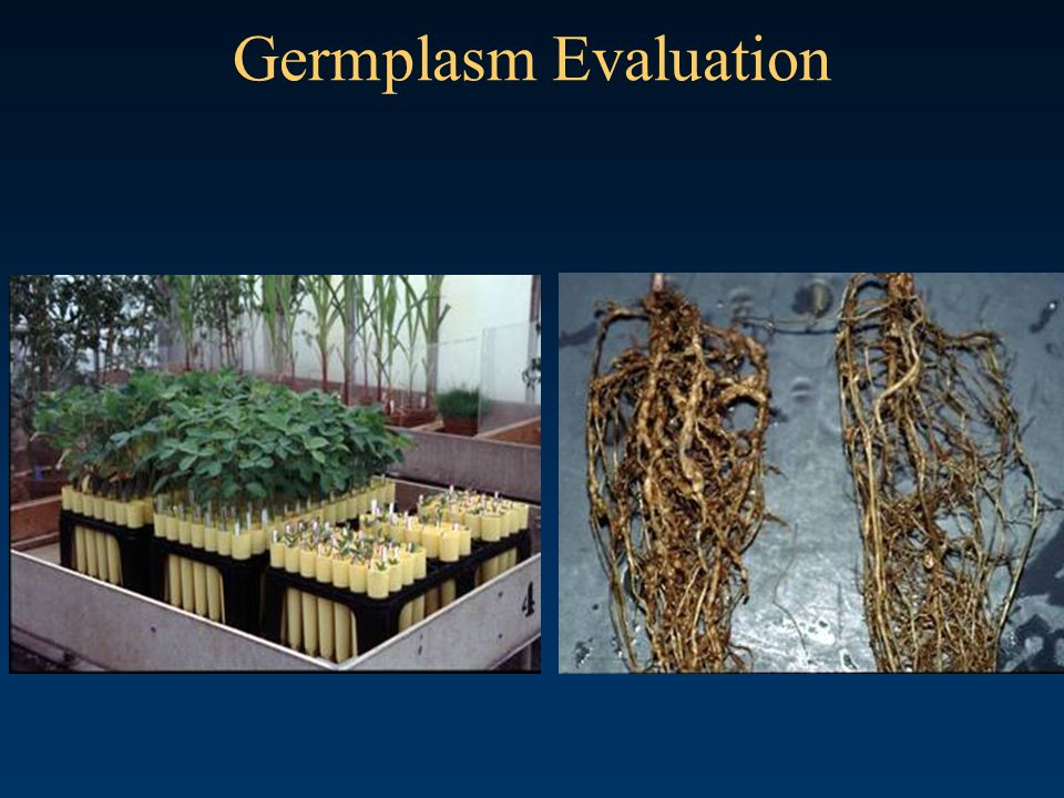 Germplasm Evaluation