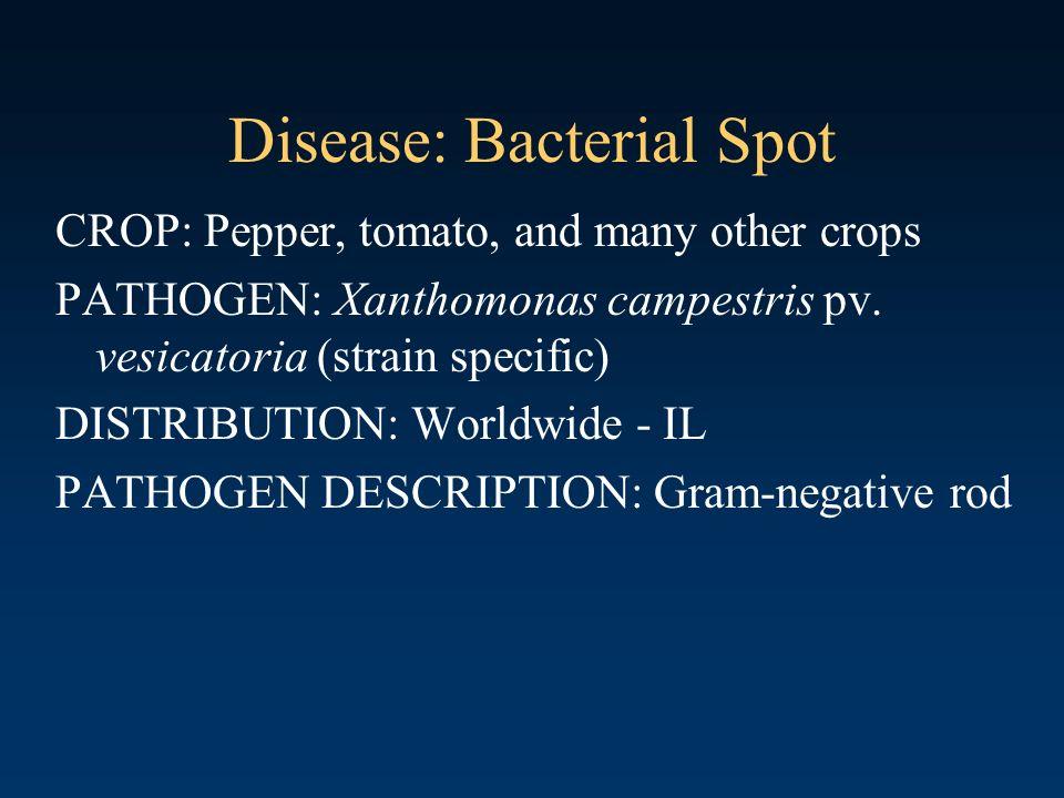 Disease: Bacterial Spot
