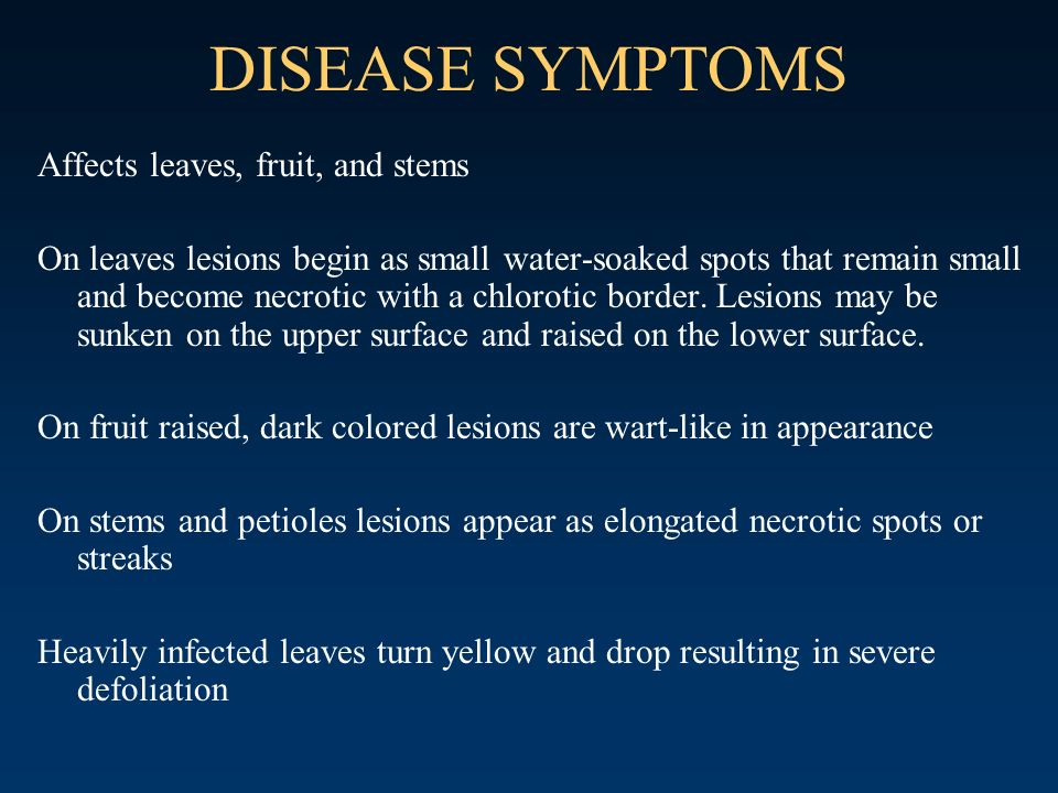DISEASE SYMPTOMS Affects leaves, fruit, and stems