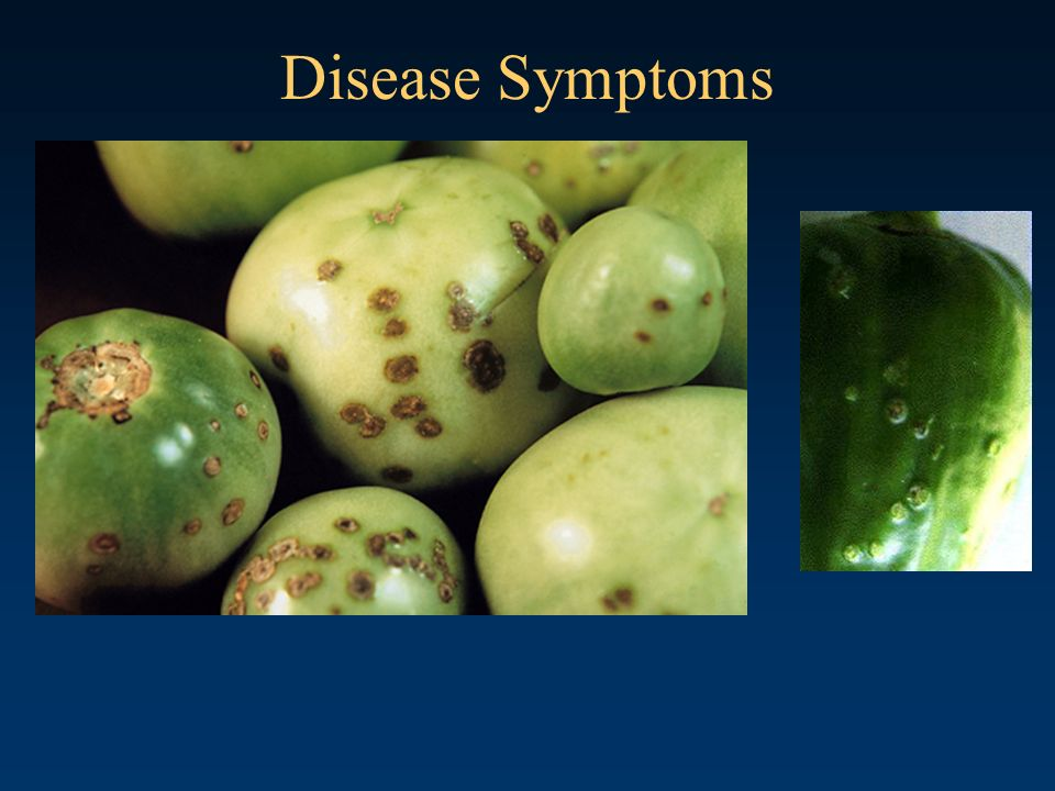 Disease Symptoms Bacterial Spot of Tomato Casual agent