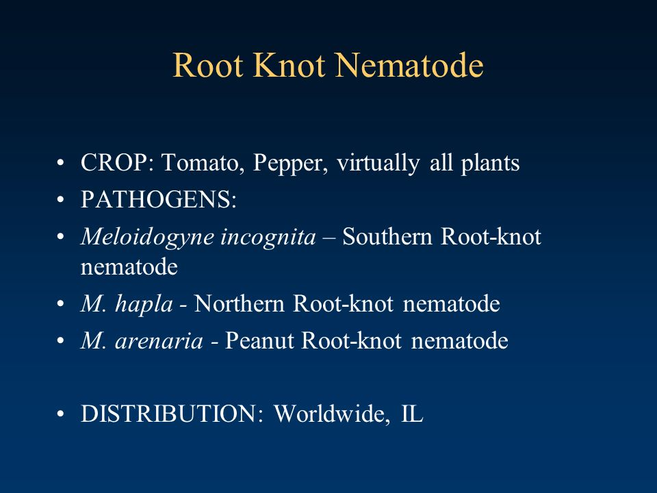 Root Knot Nematode CROP: Tomato, Pepper, virtually all plants