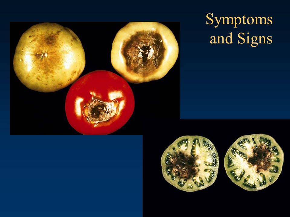 Symptoms and Signs Blossom end rot Caused by calcium deficiency