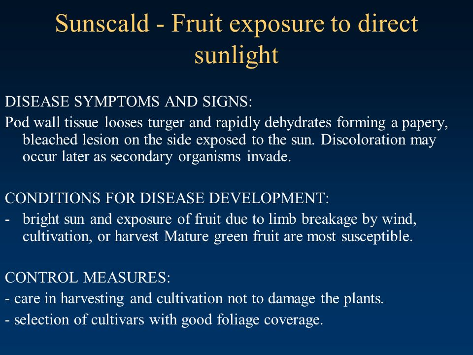 Sunscald - Fruit exposure to direct sunlight