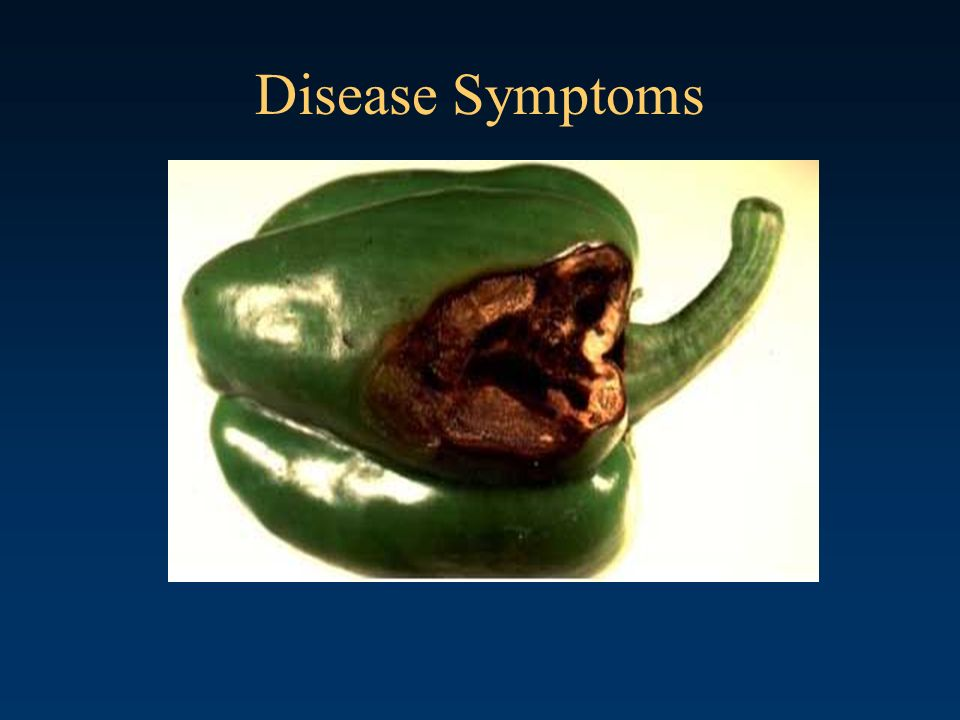 Disease Symptoms Sunscald-damaged Bell Pepper.