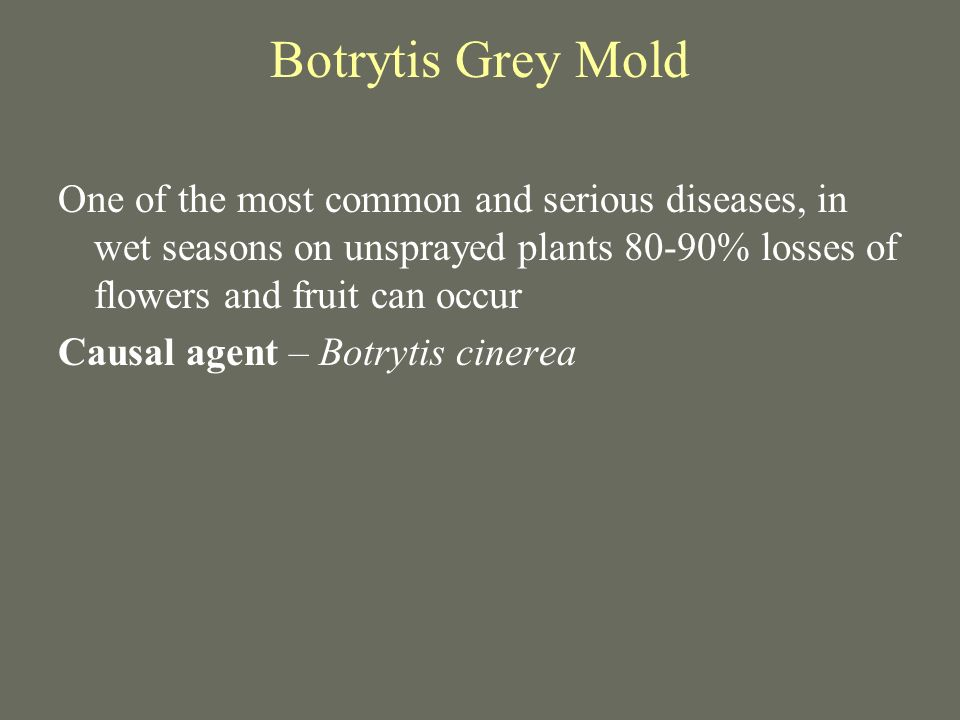 Botrytis Grey Mold One of the most common and serious diseases, in wet seasons on unsprayed plants 80-90% losses of flowers and fruit can occur.