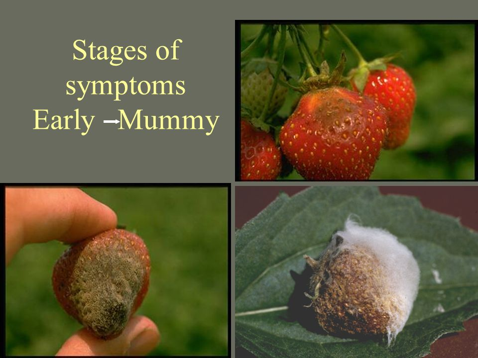 Stages of symptoms Early Mummy