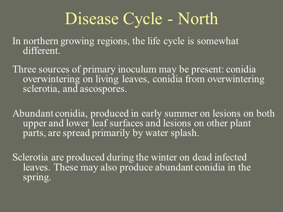 Disease Cycle - North In northern growing regions, the life cycle is somewhat different.