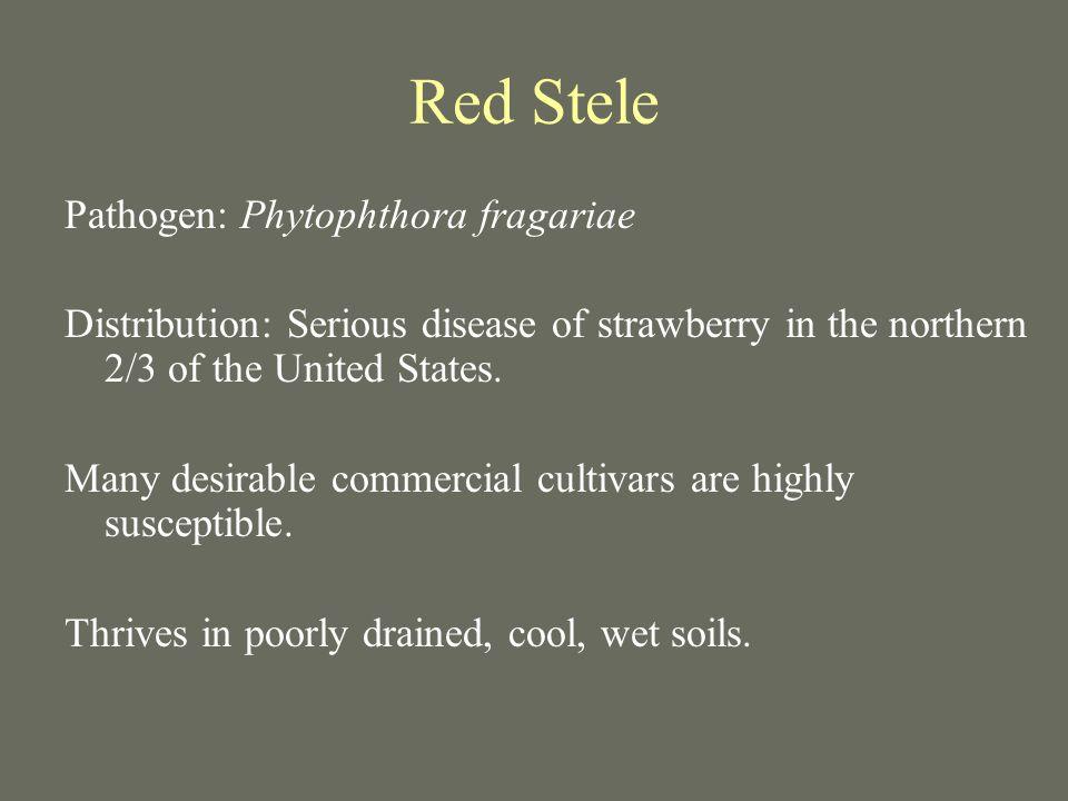 Red Stele Pathogen: Phytophthora fragariae