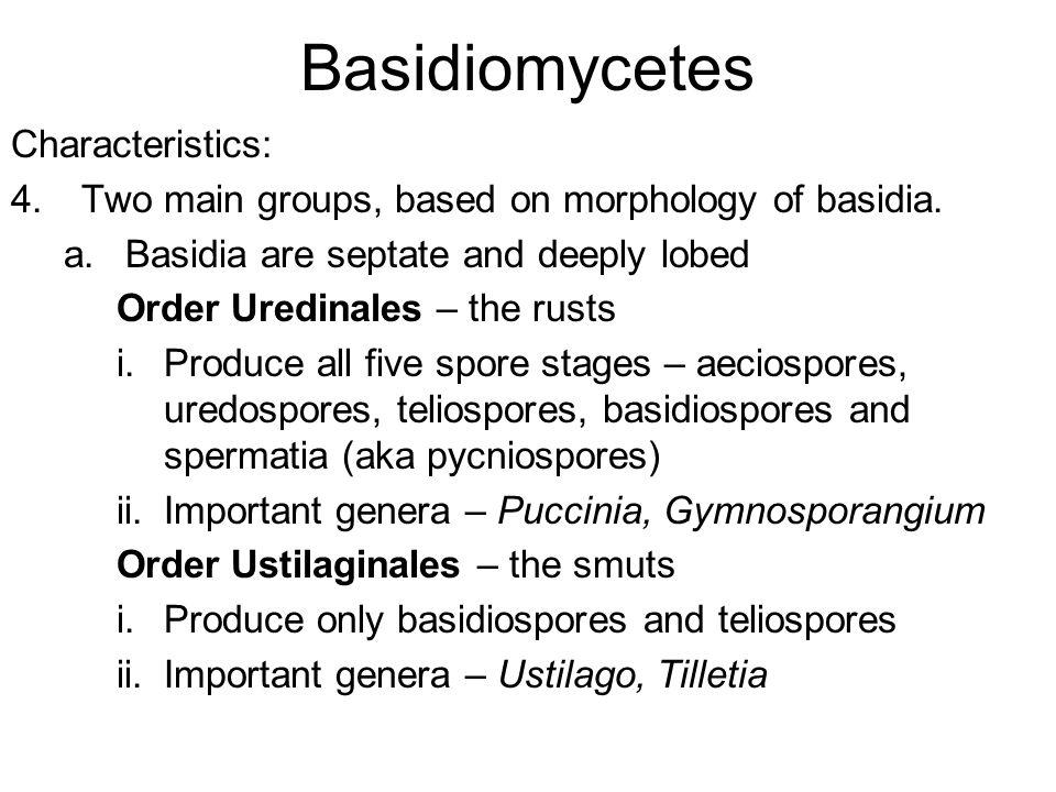 Basidiomycetes Characteristics: