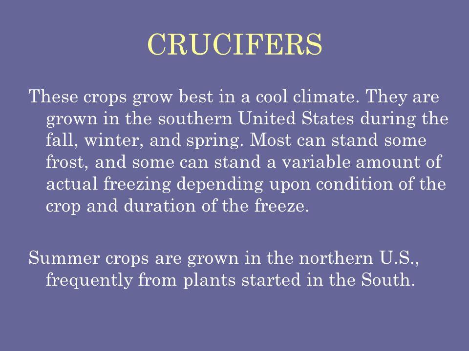 CRUCIFERS