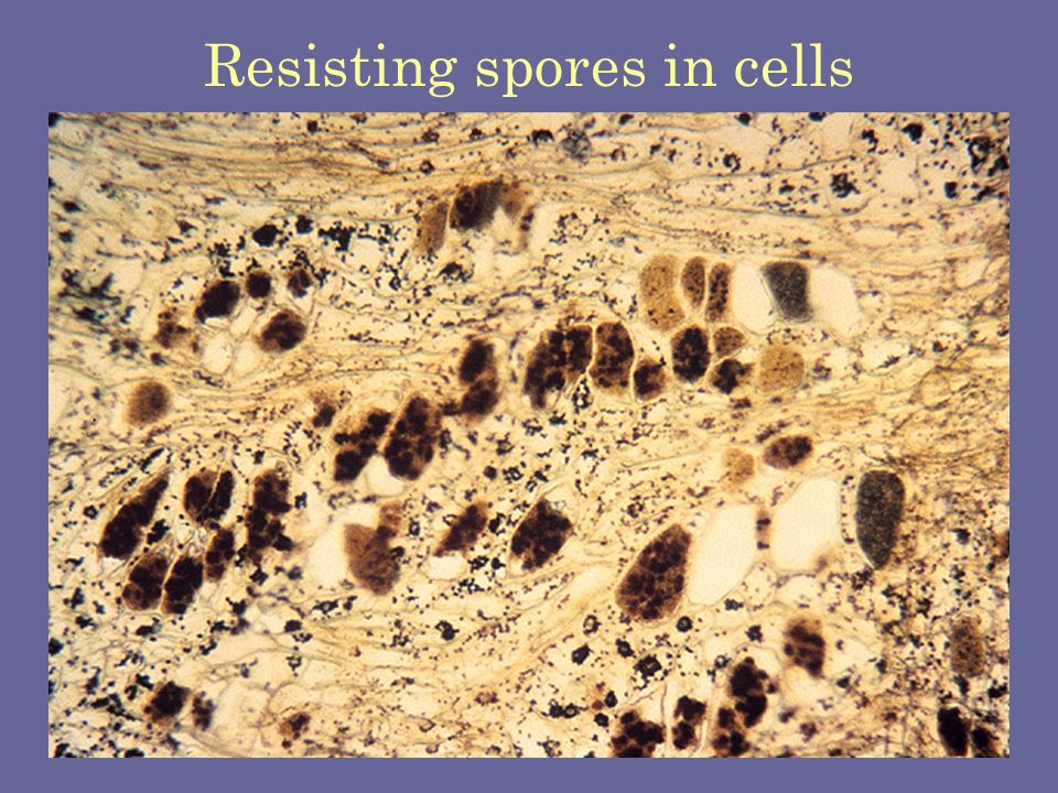 Resisting spores in cells