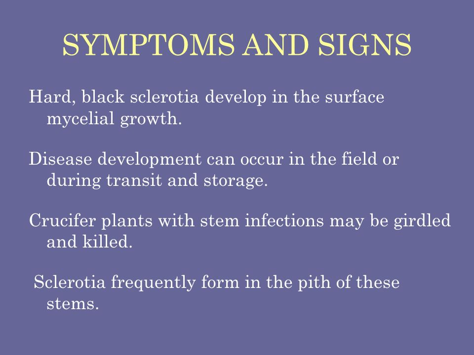 SYMPTOMS AND SIGNS Hard, black sclerotia develop in the surface mycelial growth.