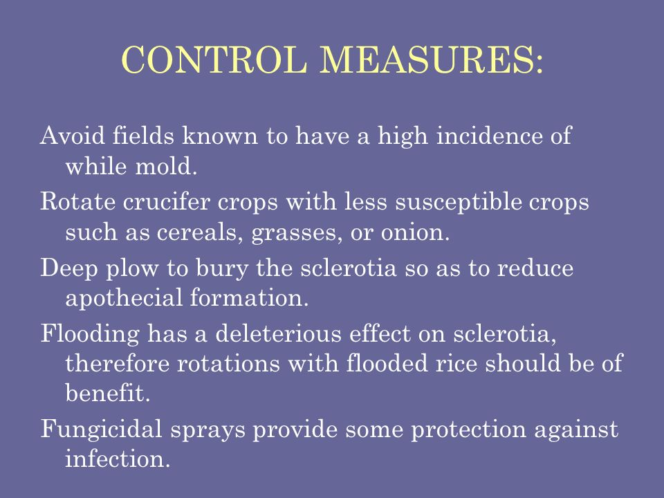 CONTROL MEASURES: Avoid fields known to have a high incidence of while mold.