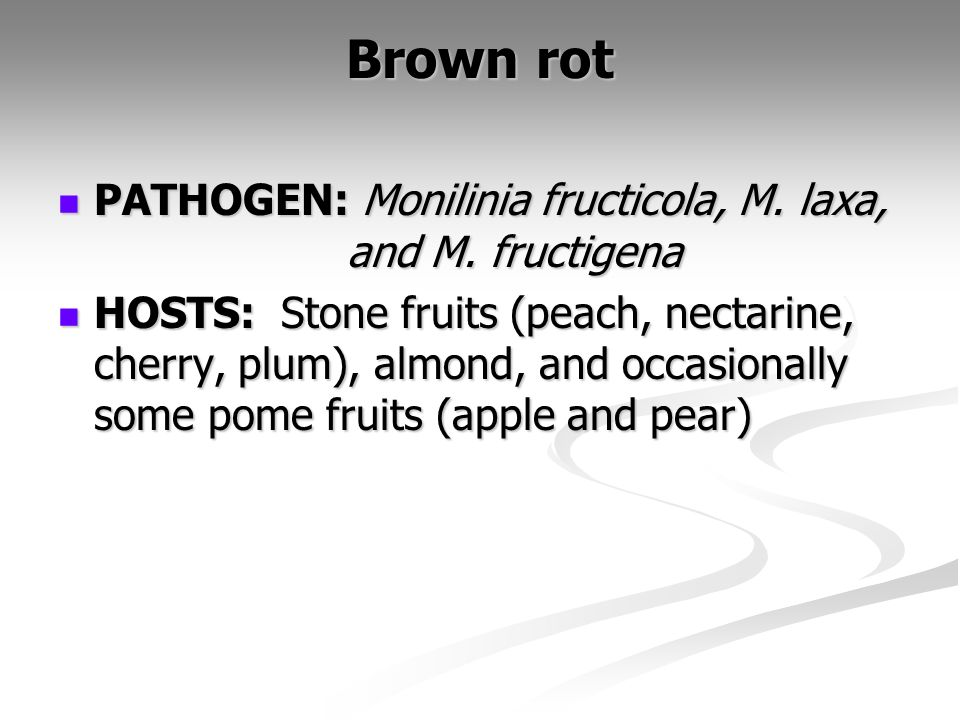 Brown rot PATHOGEN: Monilinia fructicola, M. laxa, and M. fructigena