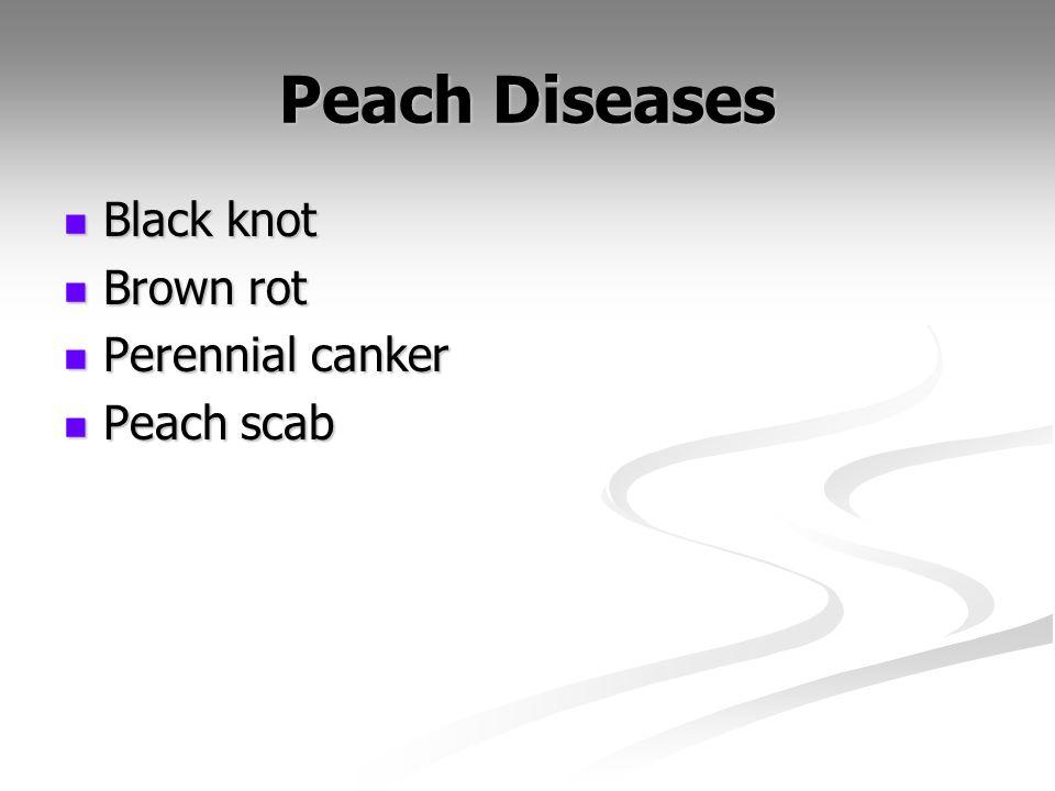 Peach Diseases Black knot Brown rot Perennial canker Peach scab