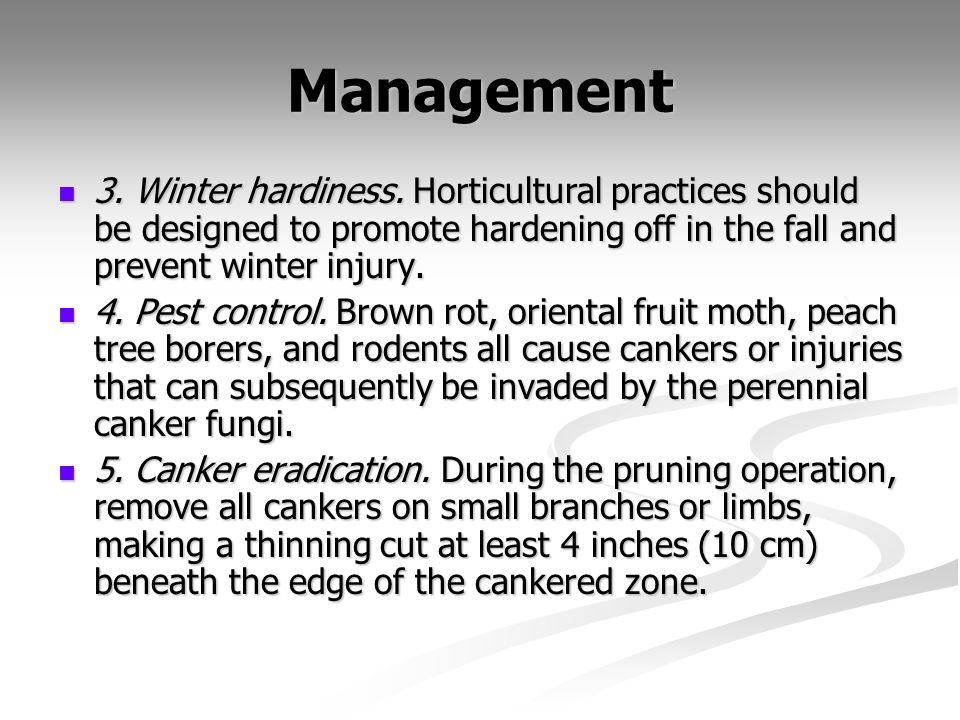 Management 3. Winter hardiness. Horticultural practices should be designed to promote hardening off in the fall and prevent winter injury.
