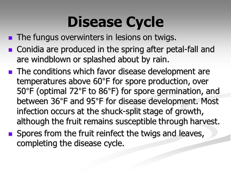 Disease Cycle The fungus overwinters in lesions on twigs.