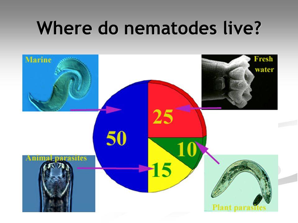 Where do nematodes live