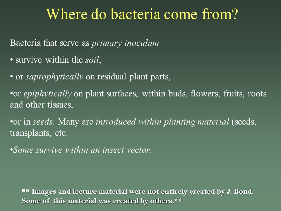 Where do bacteria come from