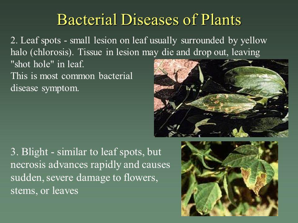 bacterial diseases in plants pdf