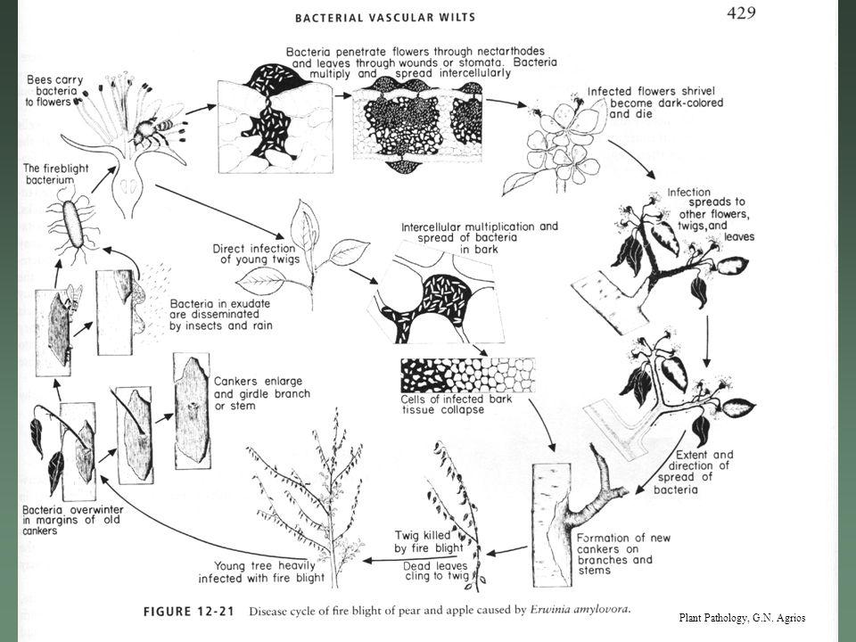 Plant Pathology, G.N. Agrios