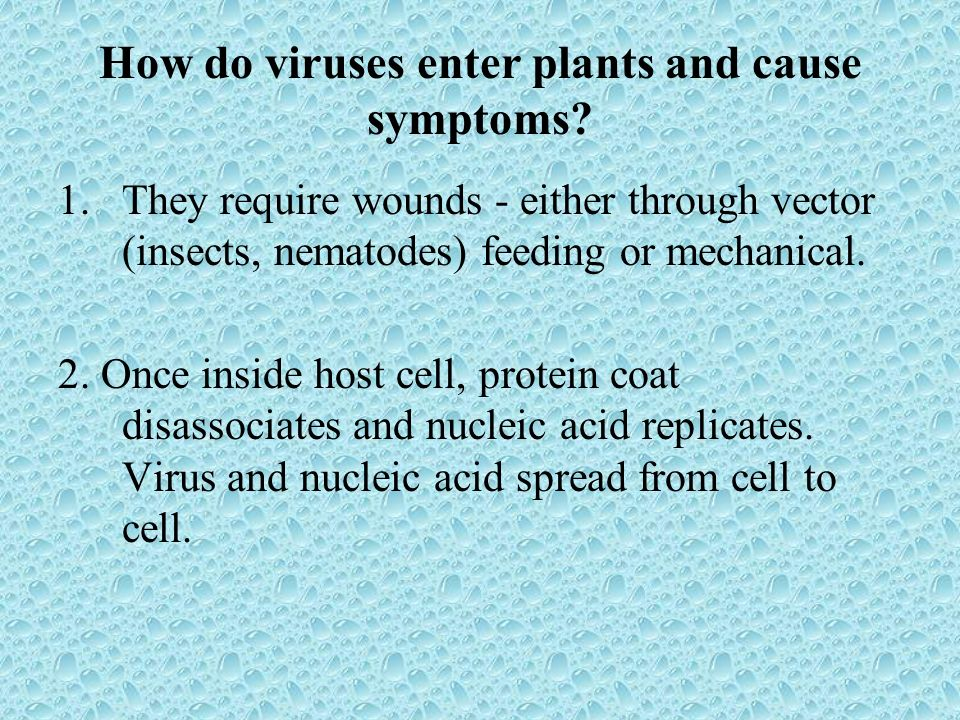 How do viruses enter plants and cause symptoms